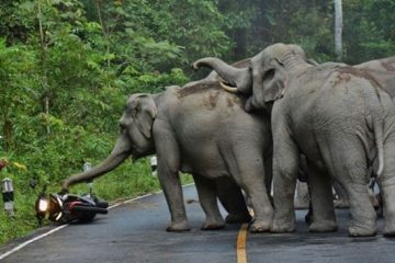 Motorcyclist attacked by elephants