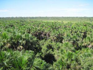 Peruvian jungle
