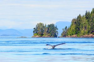 whale-watching-vancouver-island-canada-motorcycle-tour