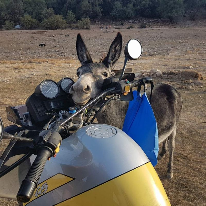 Donkey and a GS in Morocco
