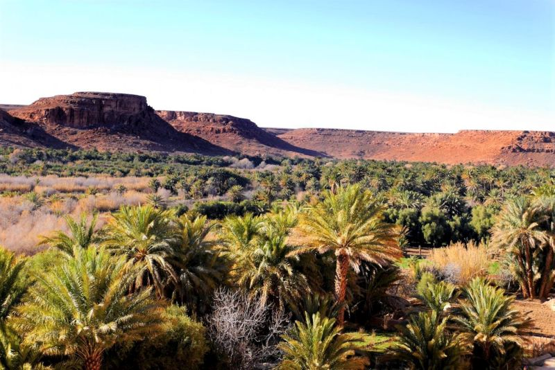 Tafilalet Oasis Morocco