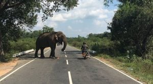 Six reasons to tour Sri Lanka by motorcycle