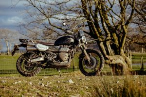 What you can learn from herding cows on a Triumph Scrambler 1200 XC
