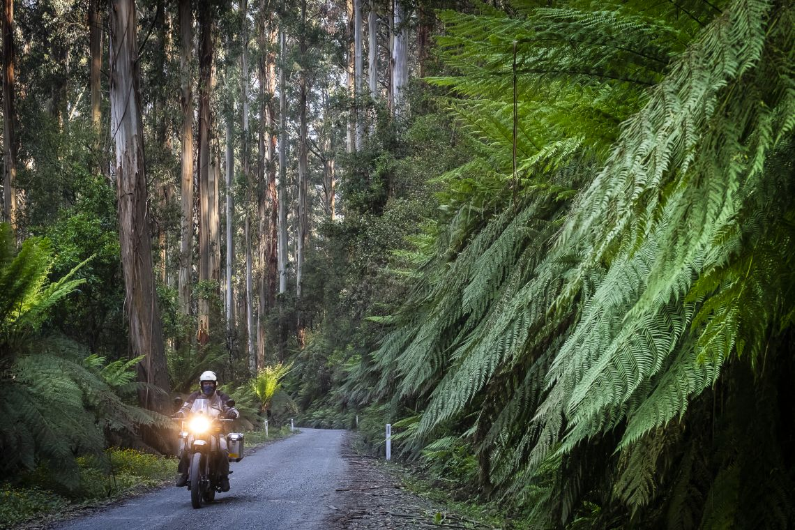 dwarfed by ferns and native trees