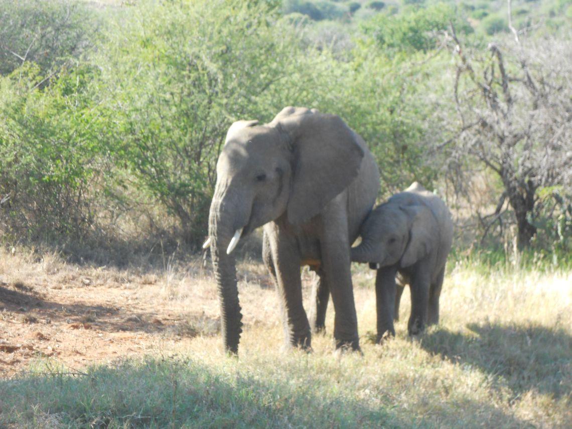 Elephants North of Nyeri