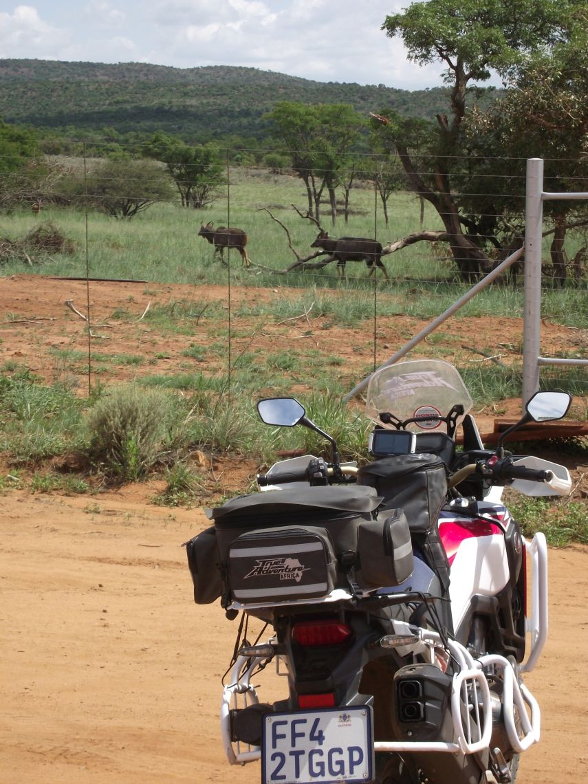 Kudu at Modimolle