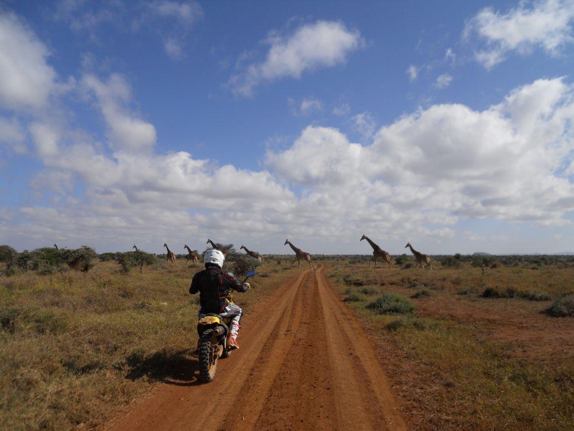 Nanyuki to Baringo Giraffe