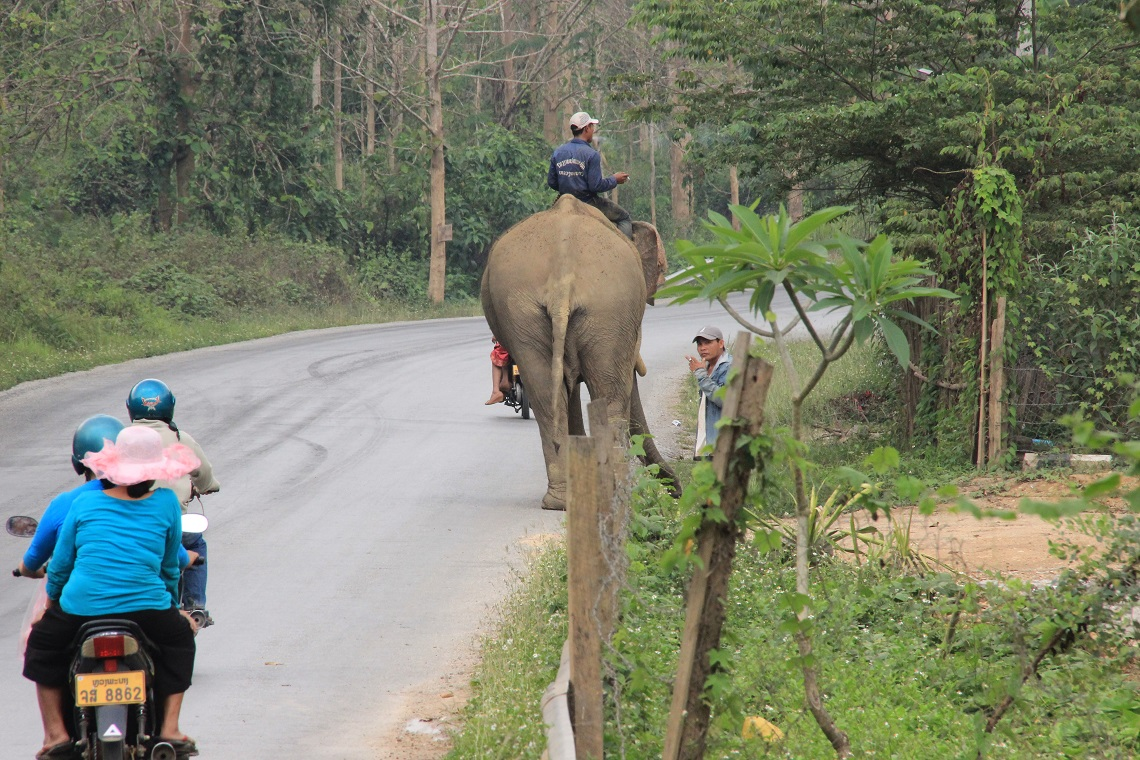 Scooter or elephant