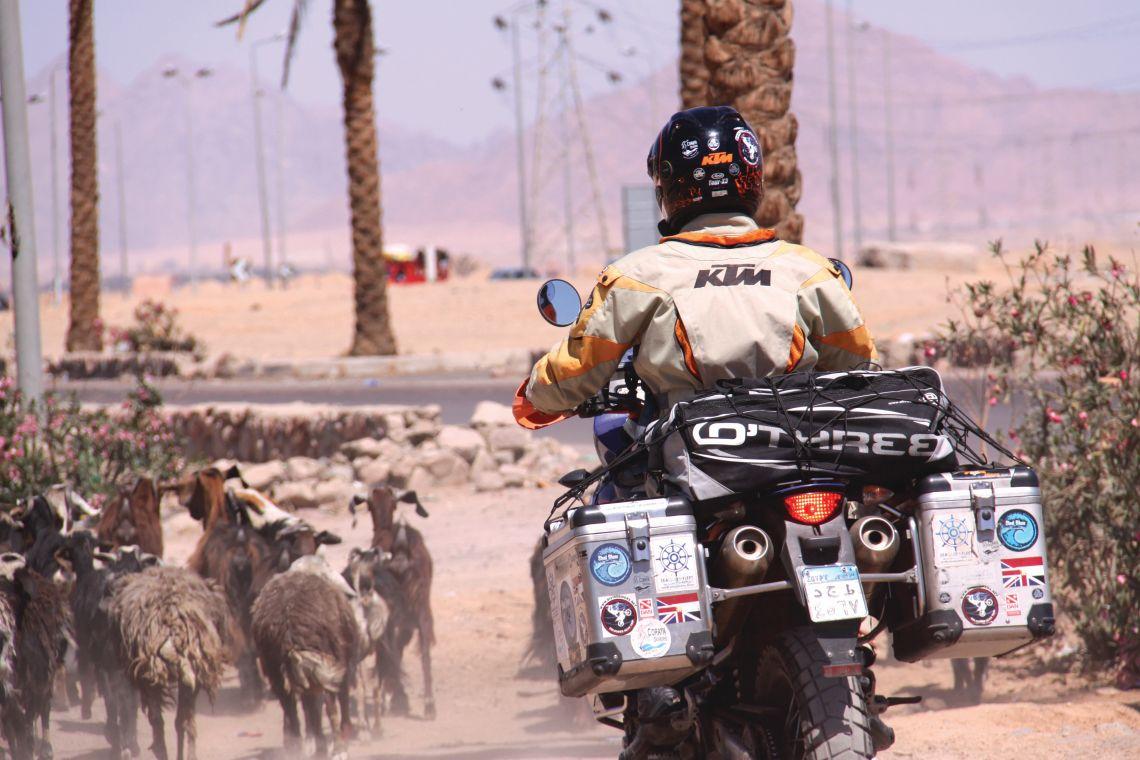 JK Goat Herding