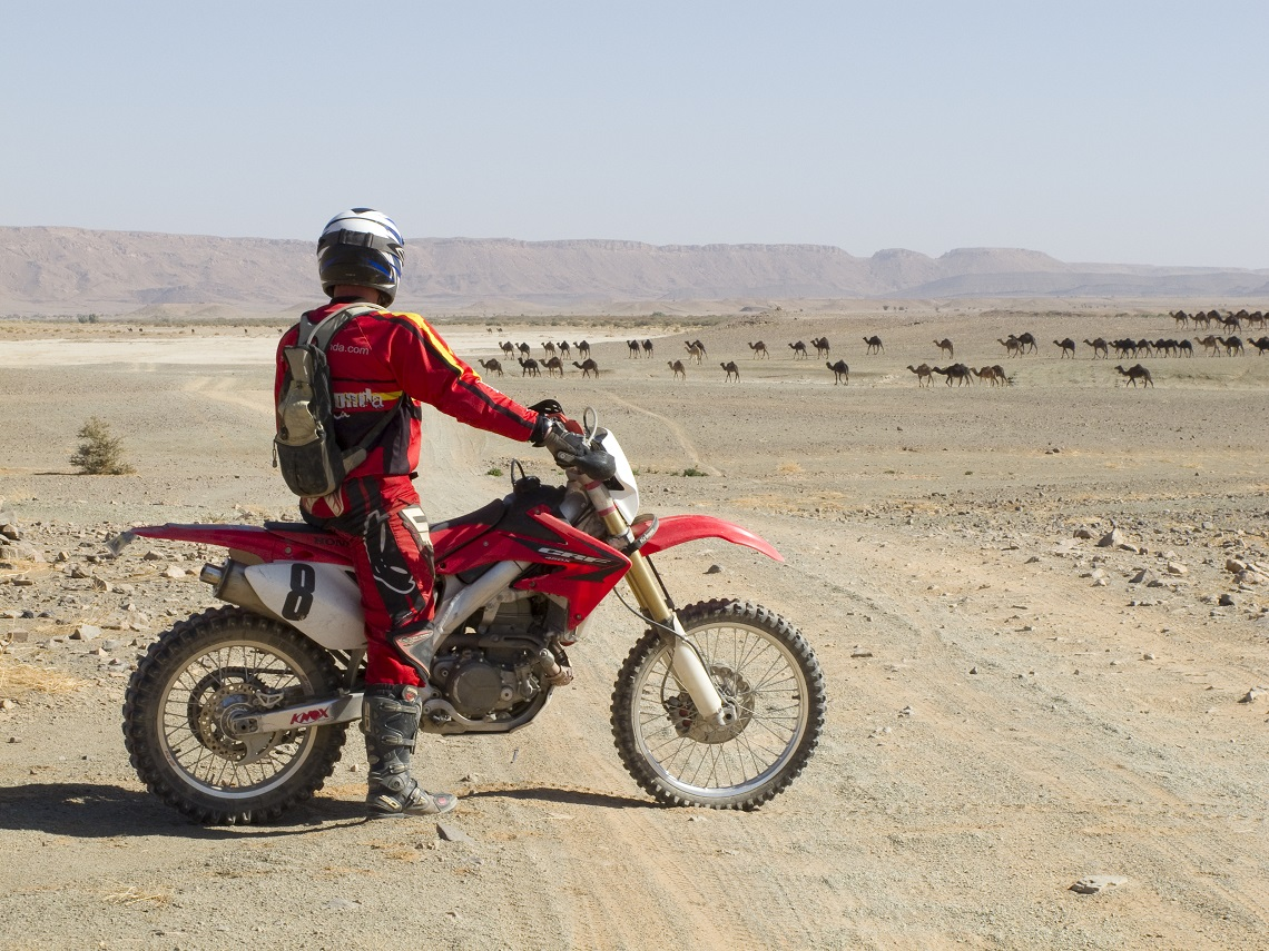 Redtread Morocco Rosie 2