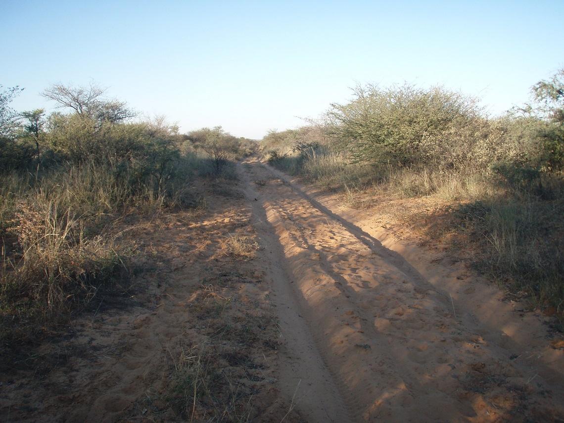 Sandy-track