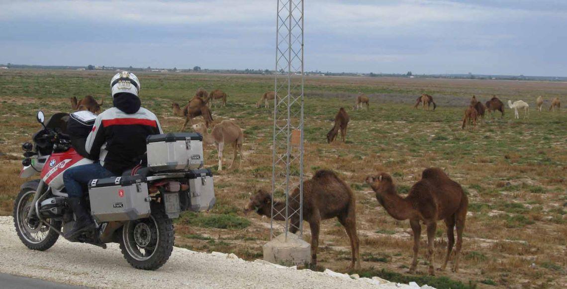Tunisia-camels